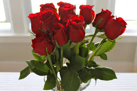 اجمل صورة وردة ورود حمراء جميلة اروع روعه
