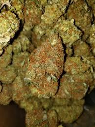 Girl Scout Cookies x Nuken AAA - BuyMailOrderMarijuana