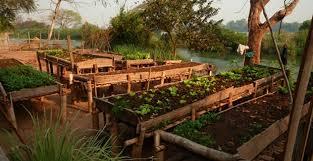 raised vegetable beds on legs