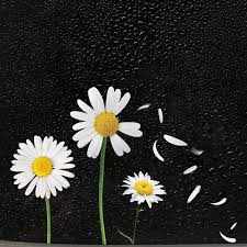 Noizzy Daisy Petals Car Stickers Floral Beautiful Life Auto Vinyl Decal Bumper Window For Women Car Tuning Styling Accessories Wish