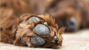 soak dog s broken nail and bandage