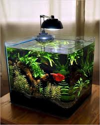 Small Tropical Fish Tank Home Interior Exterior Decor Design Ideas