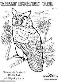 Kleurplaat Amerikaanse Oehoe Uilen Tekenen