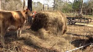 How To Protect A Round Bale Of Hay With Livestock Fence Panels Youtube