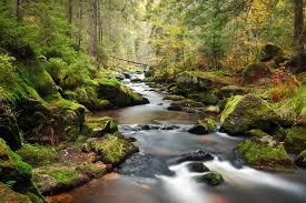Forest river trees landscape wallpaper | 3902x2601 | 281735 | WallpaperUP