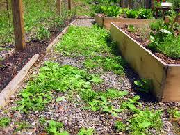Weeds In Paths Use Vinegar Not Roundup Kevin Lee Jacobs