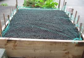 a home vegetable garden getting started