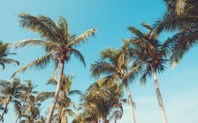 تحميل خلفيات جزيرة استوائية أشجار النخيل جوز الهند الأزرق