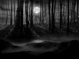 dark forest moon wallpapers top free