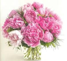 La pivoine fleur vedette du mois de mai - Le pouvoir des fleurs