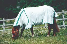 fly spray recipes for horses