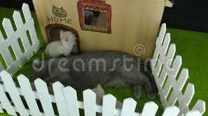 Cats Cardboard House Gopro Outdoor View Stock Video Video Of Garden Discover 110010971