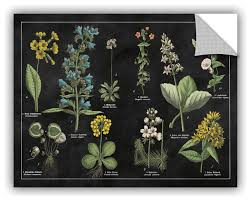Botanical Floral Chart I Black And White Decal Contemporary Wall Decals By Artwall