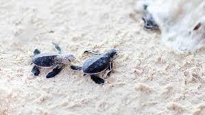 turtle wallpaper hd turtles new tab
