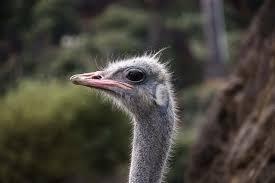 صور لـ حيوان صورة الطيور نعامة باقة أزهار مضحك