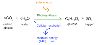 photosynthesis review article khan