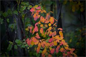 changing seasons | Christopher Martin Photography