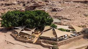 Private Petra Day Trip Including Dead Sea from Amman