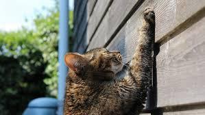 best cat scratching posts in 2020