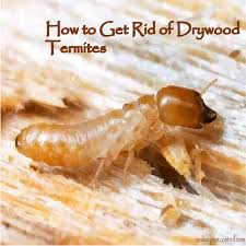 35+ Dry Wood Termites Droppings PNG