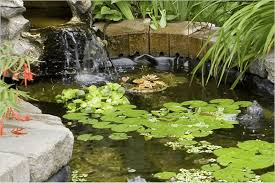 pond supplies the home depot
