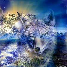 cool wolf 1080p wallpapers wolf