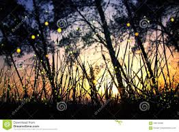 Abstract And Magical Image Of Firefly Flying In The Night Forest Fairy Tale Concept Stock Photo Image Of Imagination Fairy 106134260