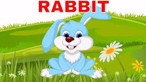 Bé học tiếng anh qua hình ảnh con vật | Con thỏ sóc hổ cáo khỉ sư ...