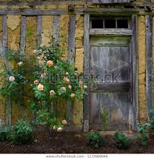 old french barn door roses stock photo