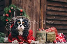 cute dog with gifts and