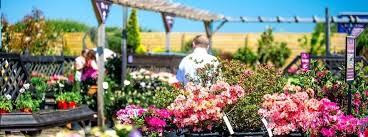 garden centres and nurseries
