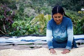 WOMEN'S LAND RIGHTS, PROCESSES OF EMPOWERMENT, AND DATA NEEDS IN THE COFFEE  GLOBAL VALUE CHAIN