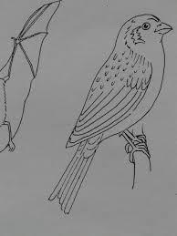 Gratis Afbeeldingen Tak Vleugel Dier Lijn Verf Schetsen