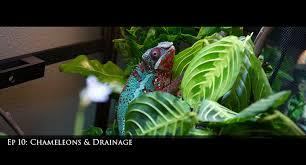 ep 10 chameleons and drainage
