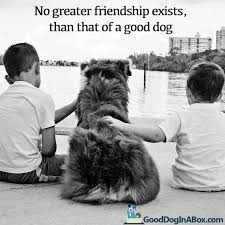dog quotes dog pictures share your friends