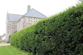 Screens Fences Trellis Walls Hedges Pod Easy Edible Gardening