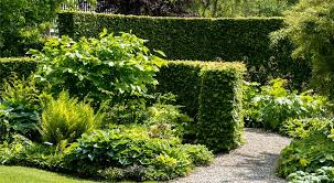 10 great privacy plants for melbourne
