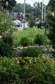 tips for creating an urban garden