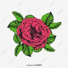وردة حمراء مرسومة باليد من ناحية رسم وردة الوردة زهرة حمراء Png