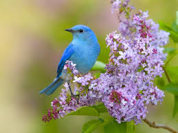 flowers birds lilac bluebirds