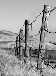 Pin By Pat Emerson On Dont Fence Me In Love 3 Wire Fence Barbed Wire Landscape Pencil Drawings