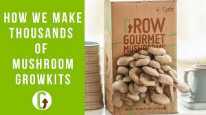 mushroom grow kits a look behind