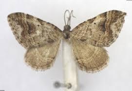 Collection specimens - Specimens - Data Portal