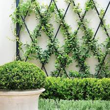 Climbing Plant Support For Garden Park House Orchard Weeding Scene
