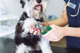 the best ways to trim your dog s nails