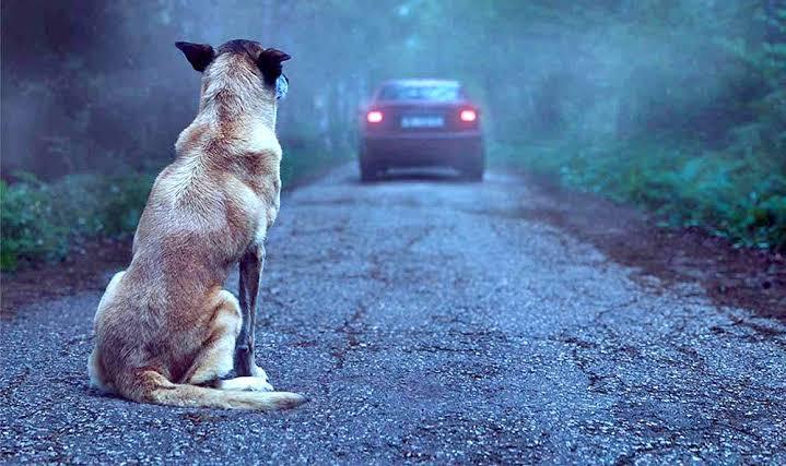 """Resultado de imagem para maus tratos a animais é crime"""""""