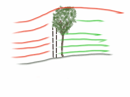 Dealing With A Windy Garden Plantplots