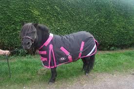 donkey heavyweight v2 turnout rug