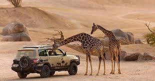 Kết quả hình ảnh cho safari bình thuận