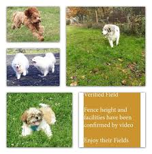 Barking Manor Surrey And Sussex Safe Dog Dog Walking Fields Enclosed Dog Walking Areas For Hire Or Free Public Use Facebook